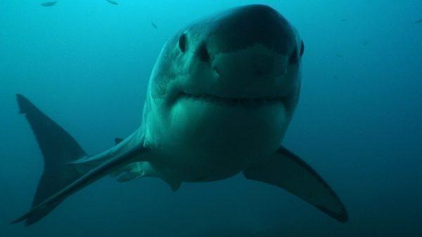 Angst vor Haien